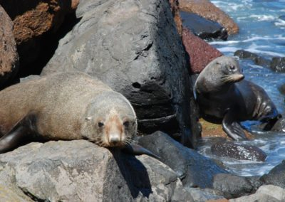 Two seals sleepy cove